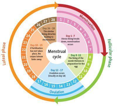 867af8144e25528d45f1d85967534691--menstrual-cup-menstrual-cycle - Copy